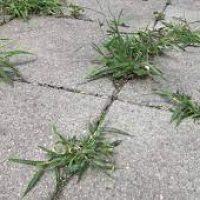 Weeds in Patio, Driveways