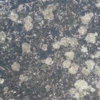 Lichen on Driveway & Patio